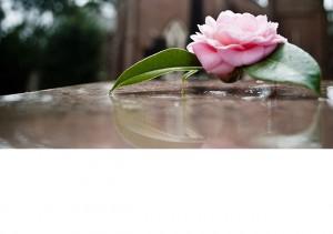Pink flower in cemetery